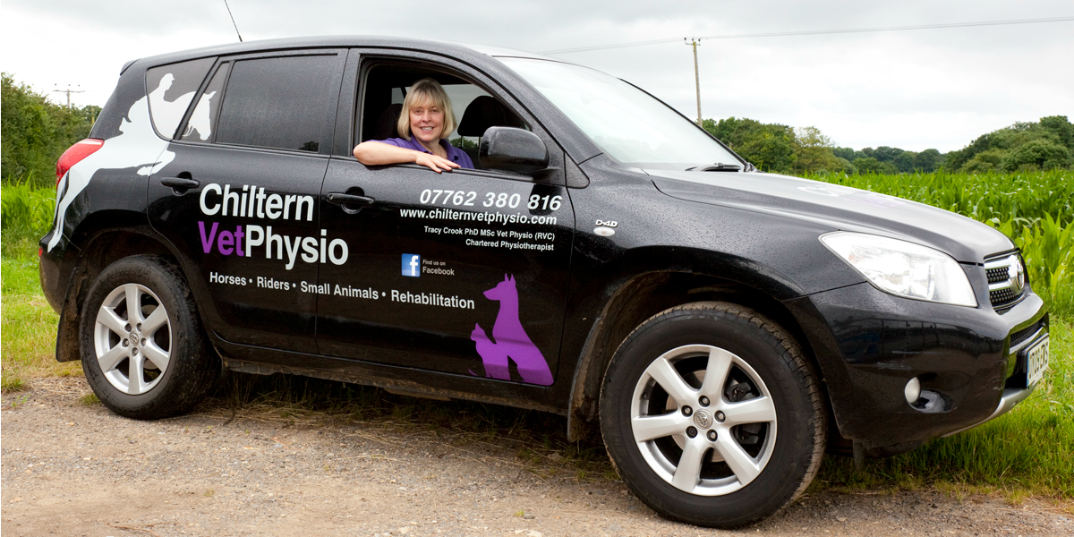 Tracy Crook | Equine Physio | Chartered Vet Physiotherapist High Wycombe Bucks